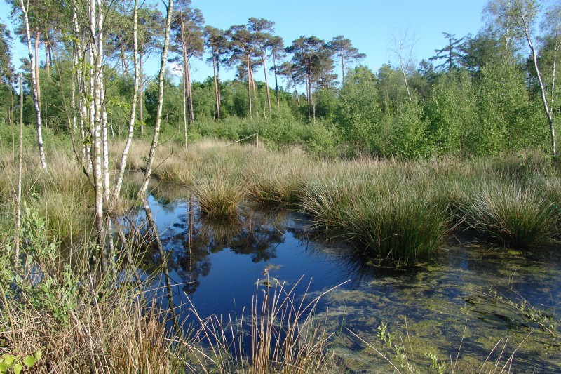 Durch Renaturierungsmaßnahmen im Wittmunder Wald entstandenes Moor